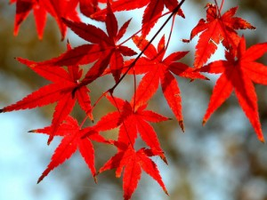 Autumn-wallpaper-autumn-9444943-500-375